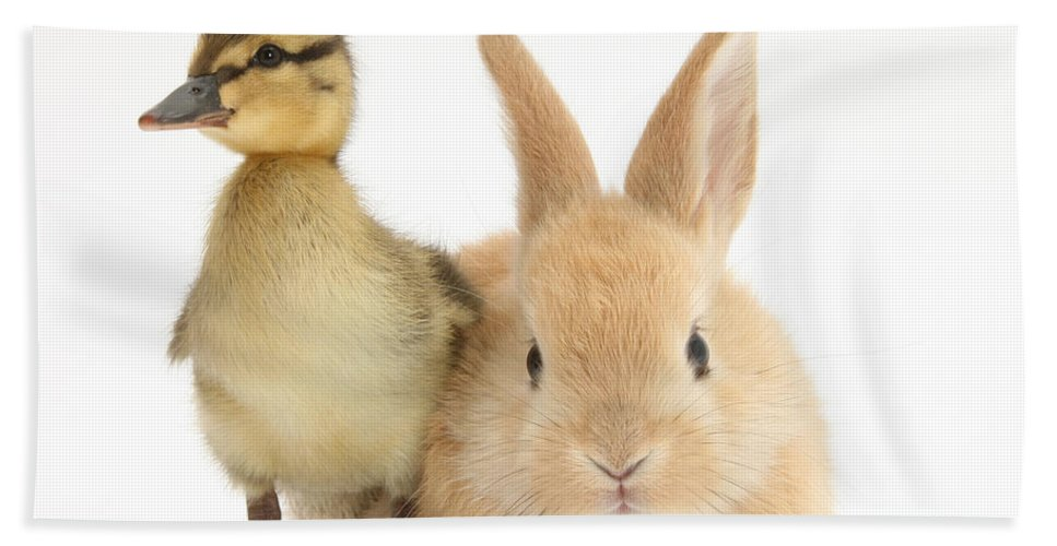 Animal Hand Towel featuring the photograph Rabbit And Duckling by Mark Taylor