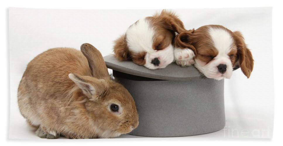 Animal Hand Towel featuring the photograph Rabbit And Spaniel Pups by Mark Taylor