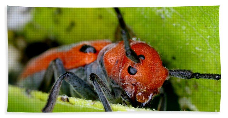 Red Milkweed Beetle Hand Towel featuring the photograph Red Milkweed Beetle by Ted Kinsman