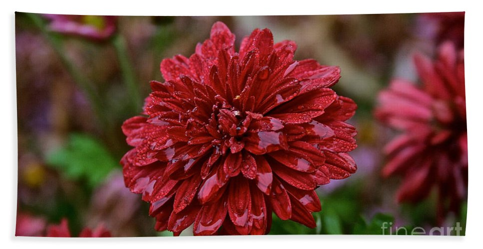 Flower Hand Towel featuring the photograph Red Petals by Susan Herber