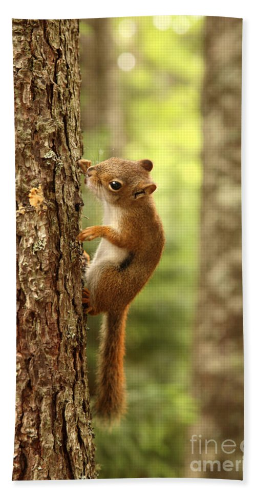 Fauna Hand Towel featuring the Red Squirrel by Ted Kinsman