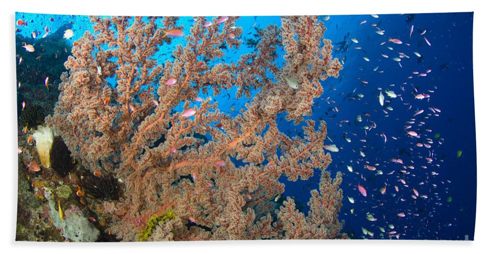 Anthozoa Bath Sheet featuring the photograph Reef Scene With Sea Fan, Papua New by Steve Jones