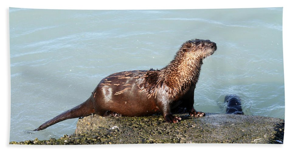 Doug Lloyd Hand Towel featuring the photograph River Otter by Doug Lloyd