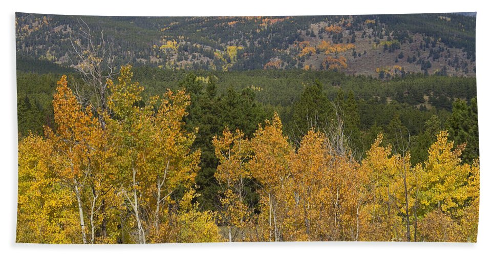 Colorful Hand Towel featuring the photograph Rocky Mountain Autumn View by James BO Insogna