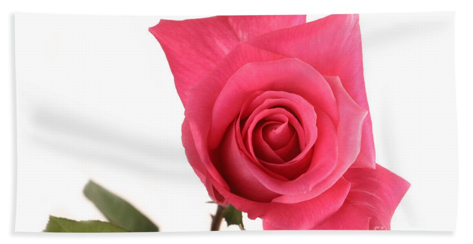 Flora Hand Towel featuring the photograph Rose Blooming by Ted Kinsman