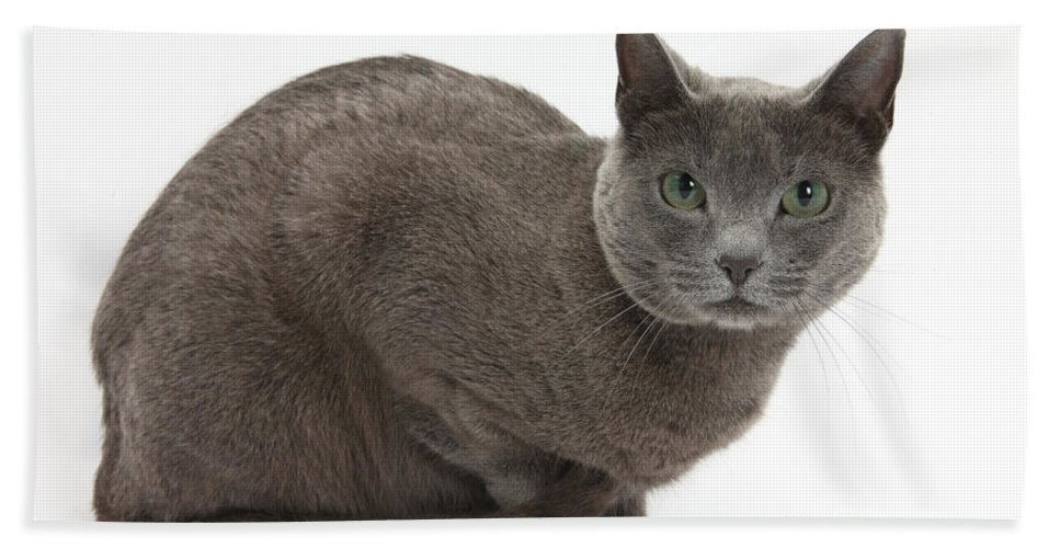 Nature Hand Towel featuring the photograph Russian Blue Cat by Mark Taylor