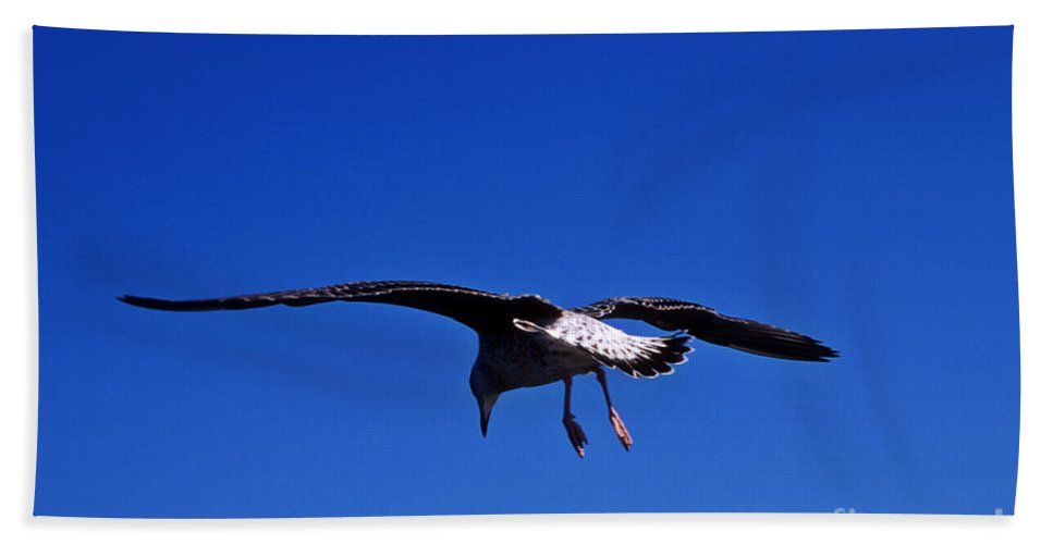 Animal Hand Towel featuring the photograph Seagull In Flight by John Greim