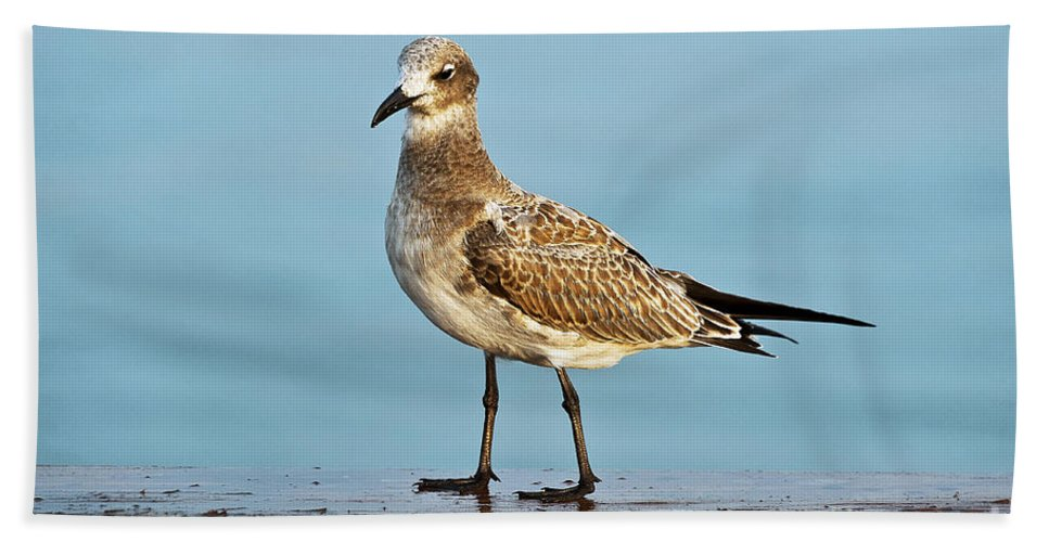 Animal Hand Towel featuring the photograph Seagull by John Greim