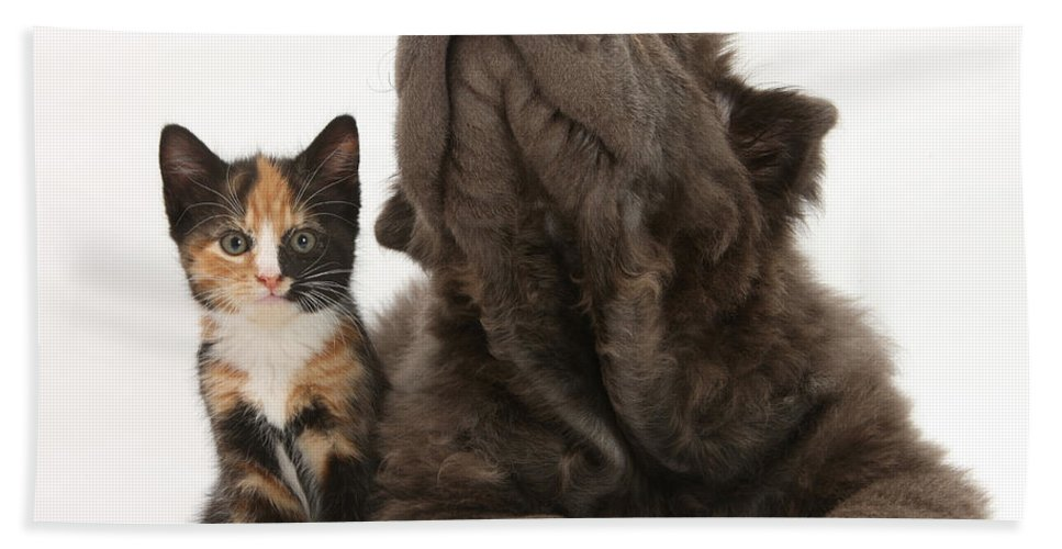 Animal Hand Towel featuring the photograph Shar Pei Puppy And Tortoiseshell Kitten by Mark Taylor