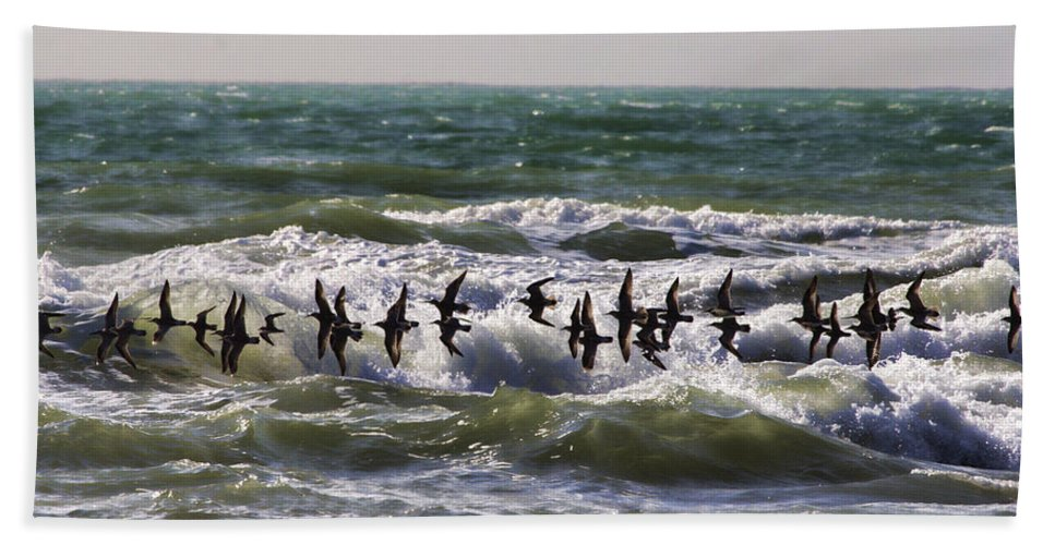 Wading Birds Bath Sheet featuring the photograph Single File by Douglas Barnard