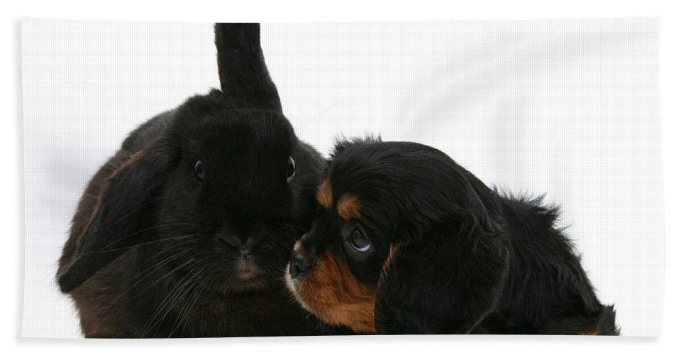 Animal Hand Towel featuring the photograph Spaniel And Rabbit by Mark Taylor