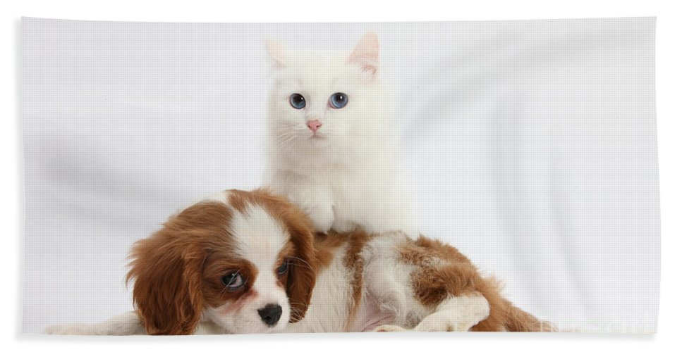 Animal Hand Towel featuring the Spaniel Puppy And Kitten by Mark Taylor