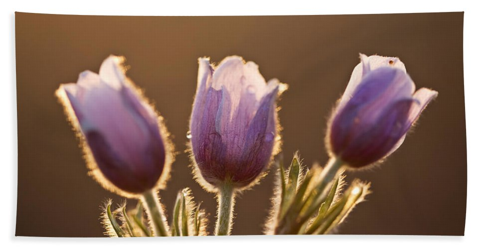 Spring Hand Towel featuring the digital art Spring Time Crocus Flower by Mark Duffy