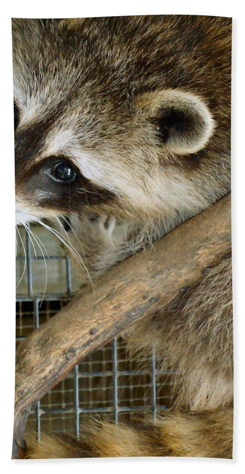 Raccoon Bath Sheet featuring the photograph Strike A Pose by Art Dingo