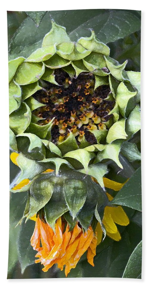 Floral Hand Towel featuring the photograph Sunflower 9 by Pamela Cooper