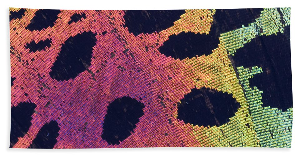 Insect Hand Towel featuring the photograph Sunset Moth Urania Ripheus by Ted Kinsman