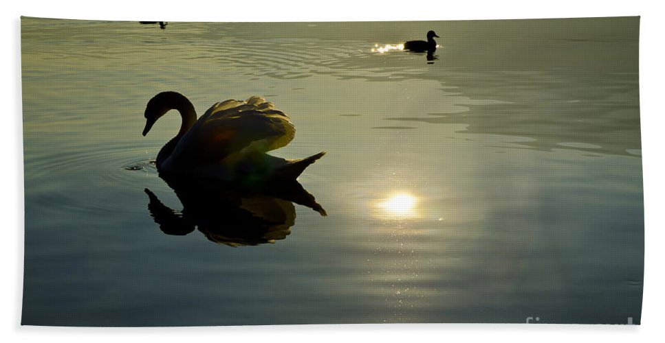 Swan Bath Sheet featuring the photograph Swan And Ducks by Mats Silvan