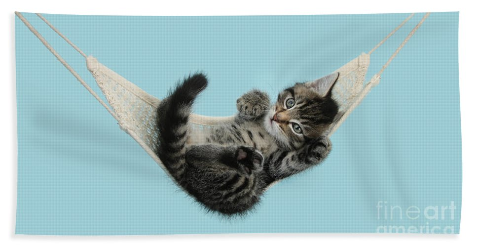 Animal Hand Towel featuring the photograph Tabby Kitten In Hammock by Mark Taylor