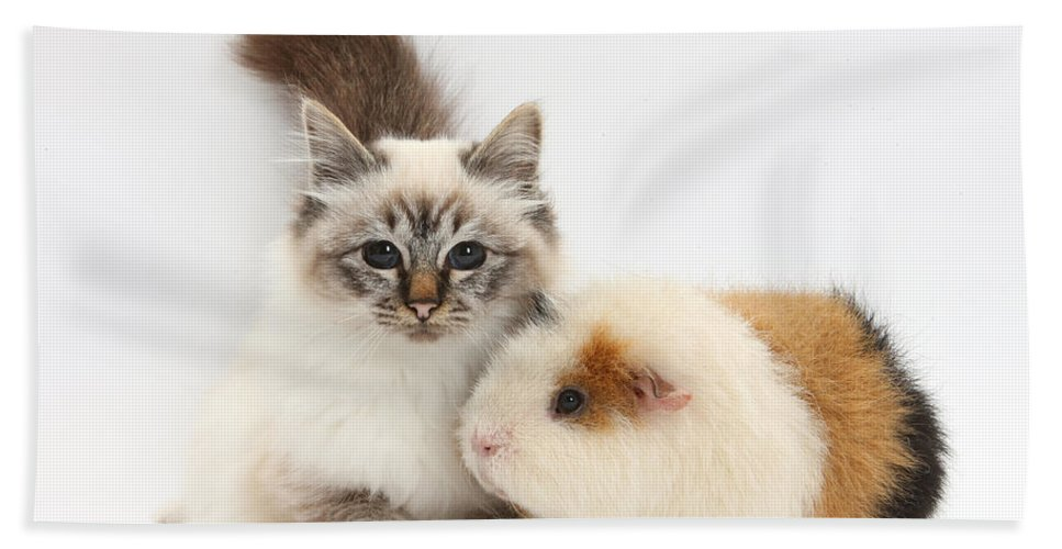 Nature Hand Towel featuring the Tabby-point Birman Cat And Guinea Pig by Mark Taylor