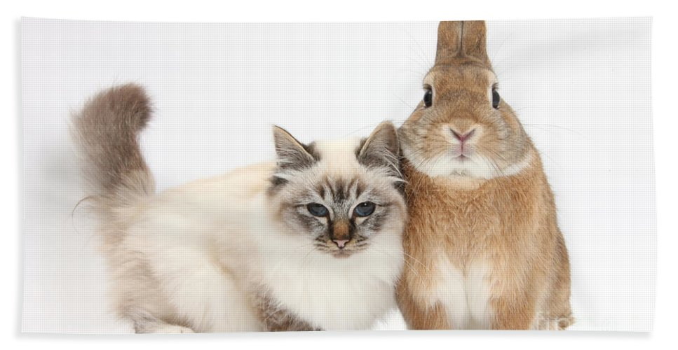Nature Hand Towel featuring the photograph Tabby-point Birman Cat And Rabbit by Mark Taylor