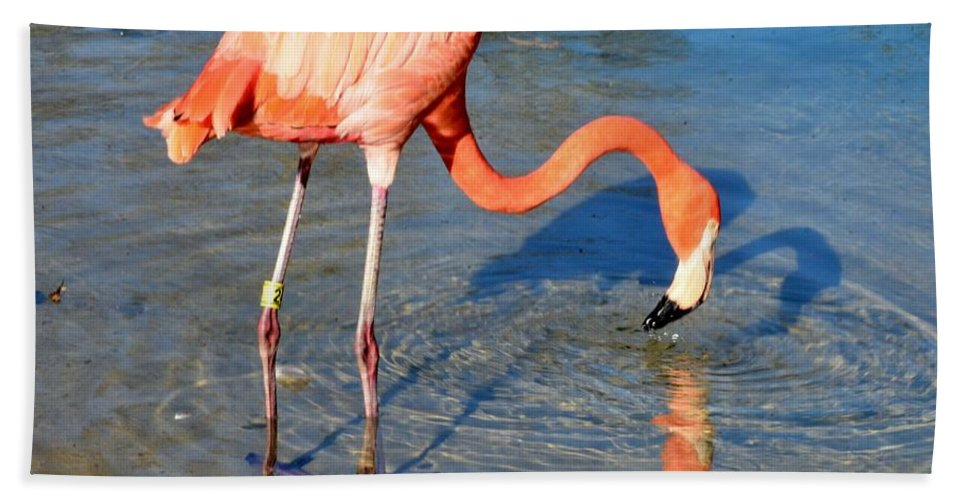 Flamingo Bath Sheet featuring the photograph Taking A Drink by Kathleen Struckle
