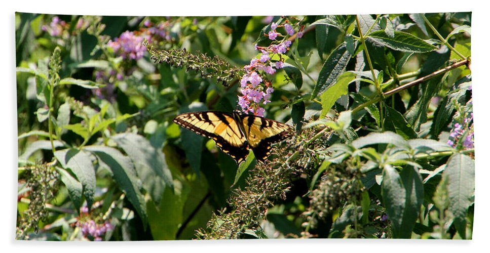 Butterfly Bath Sheet featuring the photograph Tiger Swallowtail Butterfly by Ericamaxine Price