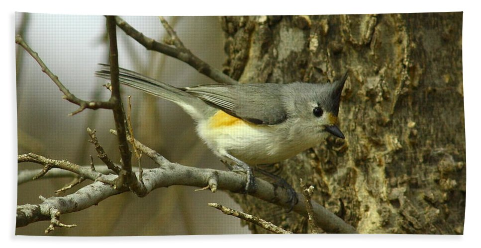 Animal Bath Sheet featuring the photograph Tufted Titmouse by Robert Frederick