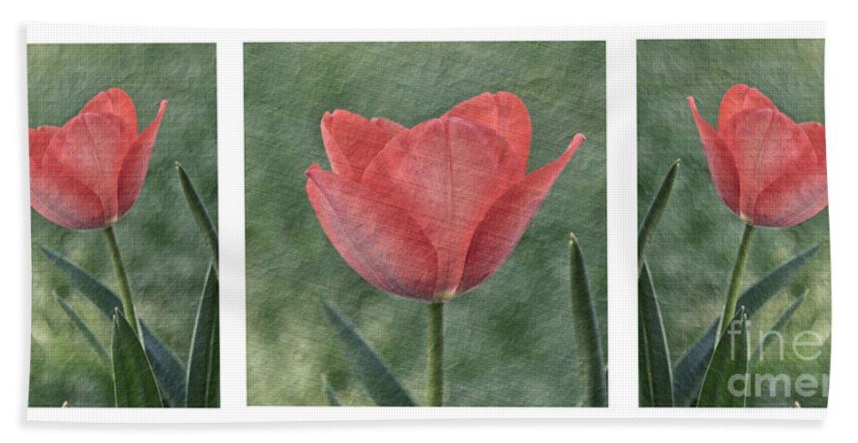 Tulip Bath Sheet featuring the photograph Tulip Trio by Susan Cliett