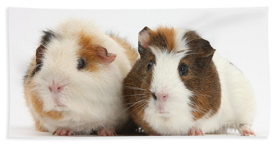 Nature Hand Towel featuring the photograph Two Guinea Pigs by Mark Taylor