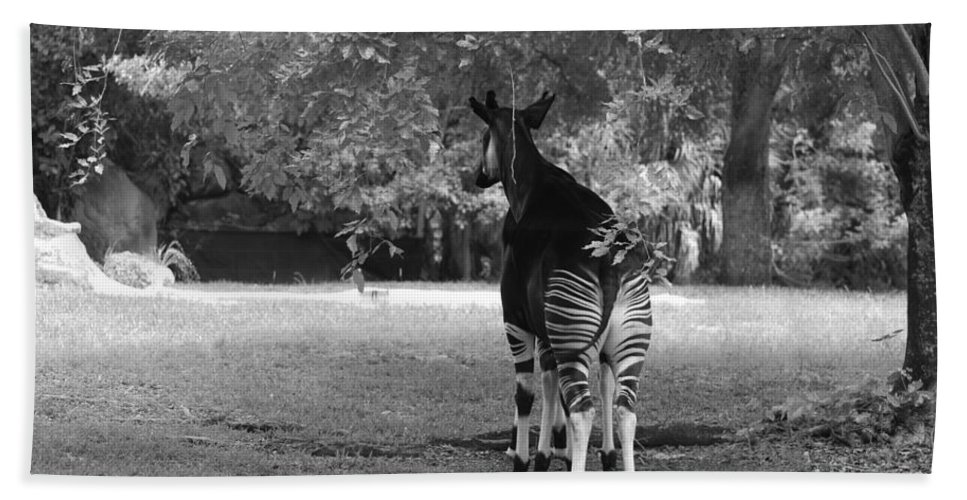 Animal Bath Sheet featuring the photograph Two Stripes In Black And White by Rob Hans