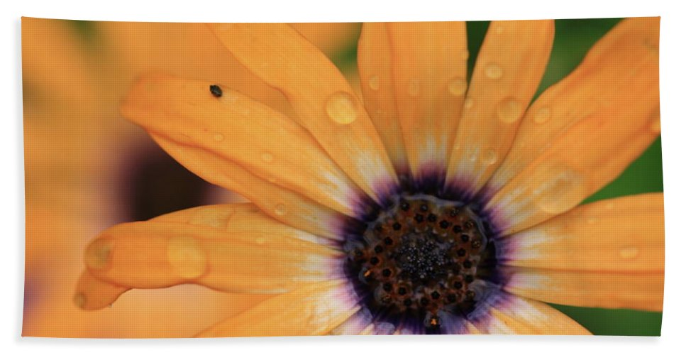 Flowers Hand Towel featuring the photograph Untitled by Rick Berk