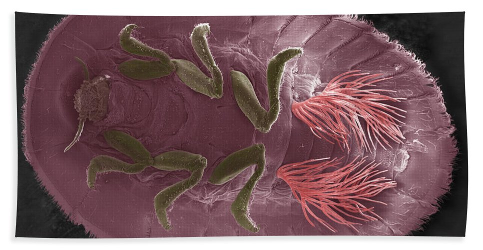 Colored Sem Hand Towel featuring the photograph Water Penny Larva by Ted Kinsman