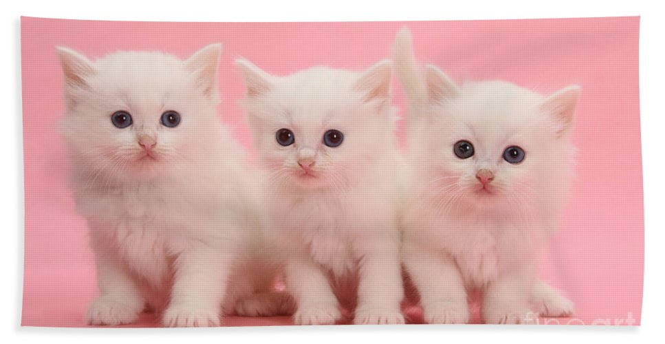 Animal Hand Towel featuring the photograph White Kittens by Mark Taylor