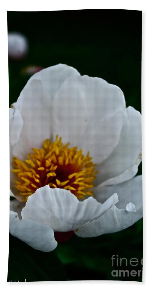 Plant Bath Sheet featuring the photograph White Petals by Susan Herber