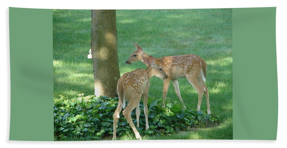 Witetail Deer Bath Sheet featuring the photograph Whitetail Fawns by Randy J Heath