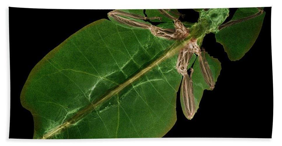 Giant Leaf Insect Hand Towel featuring the X-ray Of A Giant Leaf Insect by Ted Kinsman