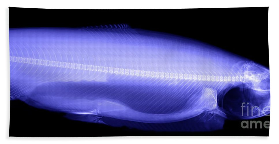 Xray Hand Towel featuring the photograph X-ray Of A Trout by Ted Kinsman
