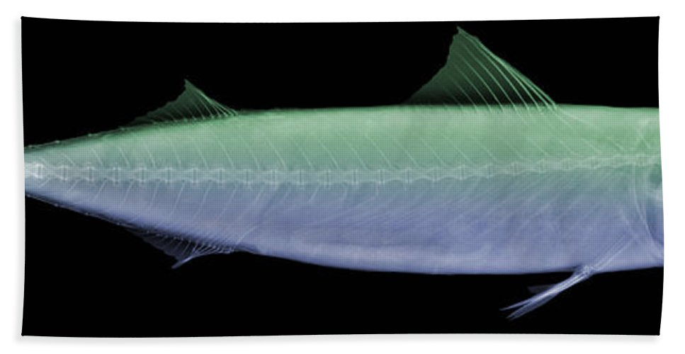 Animal Hand Towel featuring the photograph X-ray Of An Atlantic Mackerel by Ted Kinsman
