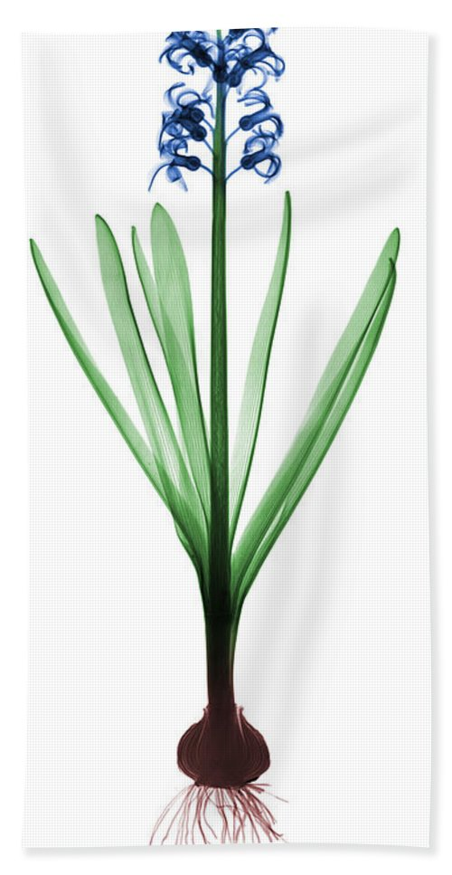 Plant Hand Towel featuring the photograph X-ray Of Hyacinth by Ted Kinsman
