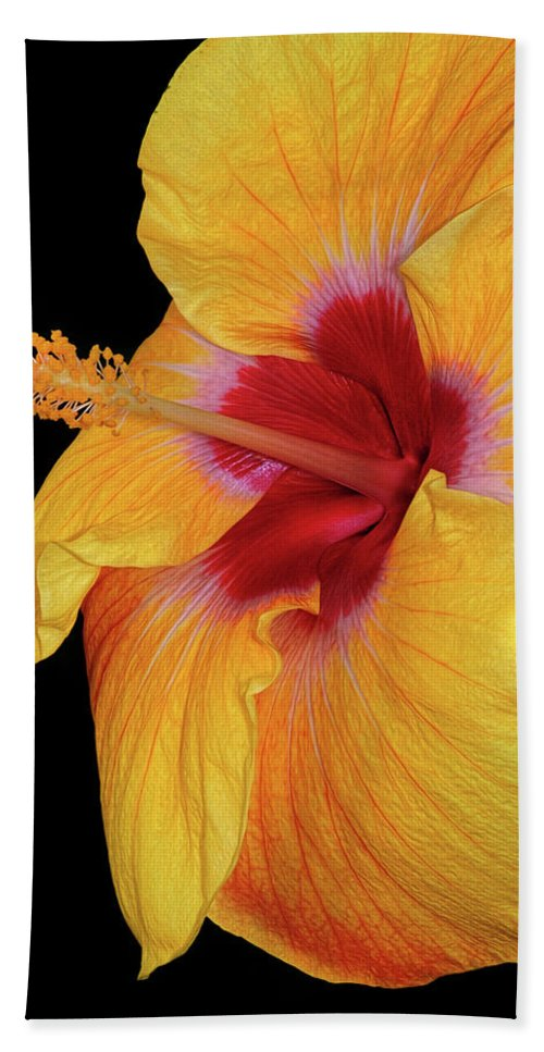 Hibiscus Bath Sheet featuring the photograph Yellow Hibiscus by Dave Mills
