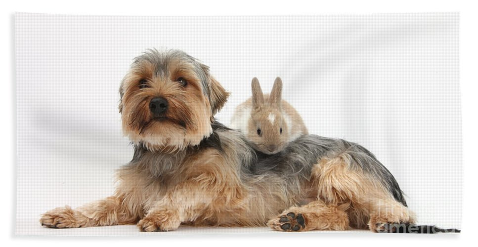 Nature Hand Towel featuring the photograph Yorkshire Terrier Dog And Baby Rabbit by Mark Taylor