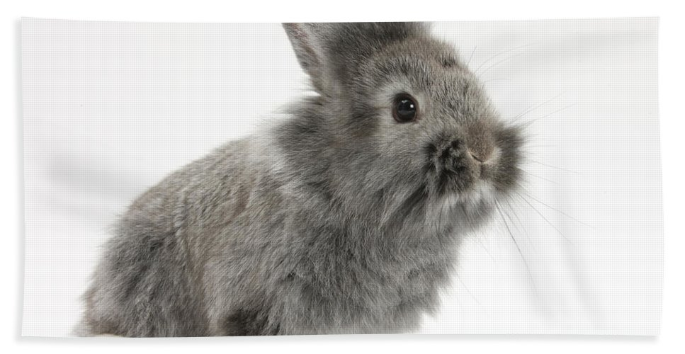 Nature Hand Towel featuring the photograph Young Silver Lionhead Rabbit by Mark Taylor