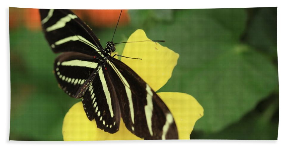 Flowers Hand Towel featuring the photograph Zebra Longwing by Rick Berk