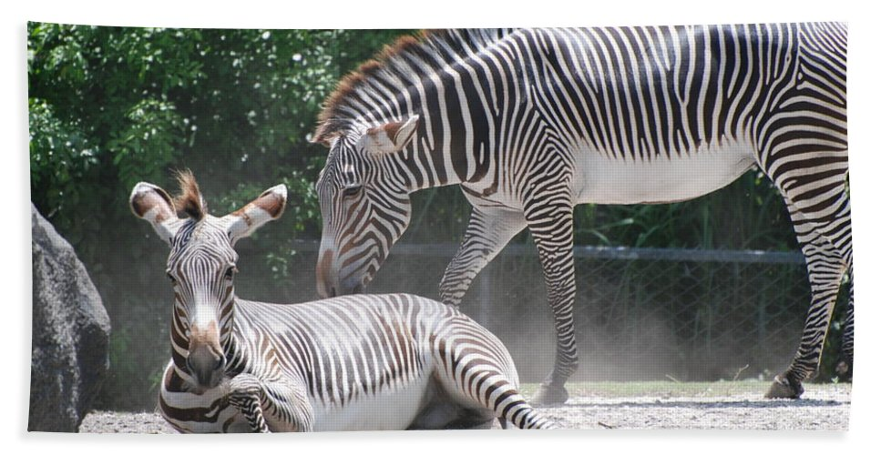 Animal Hand Towel featuring the photograph Zebras by Rob Hans