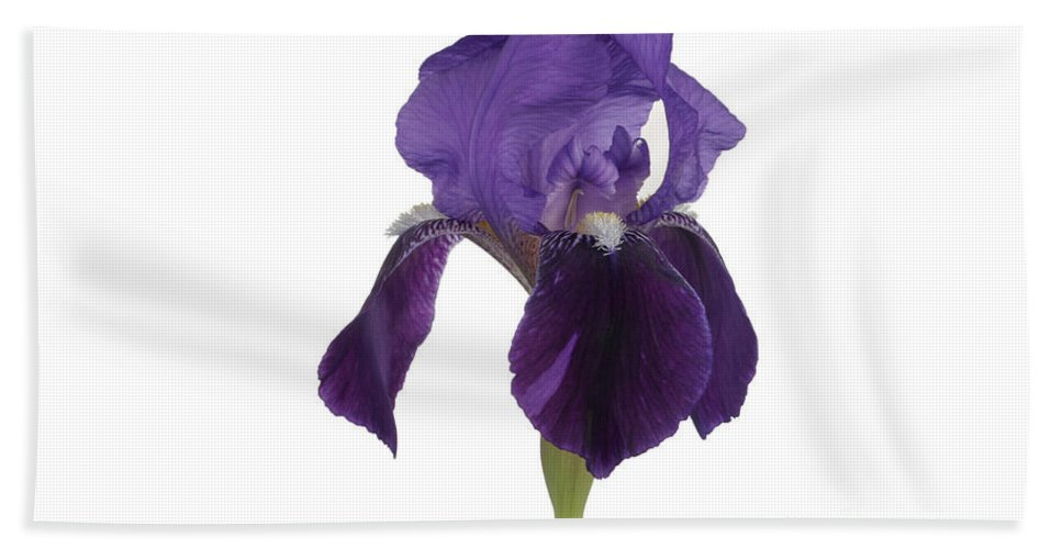 Flora Hand Towel featuring the photograph Blue Iris Blooming by Ted Kinsman