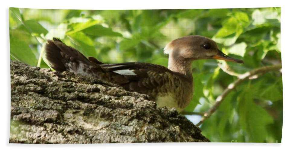 Immature Hand Towel featuring the photograph Immature Hooded Merganser by Lori Tordsen