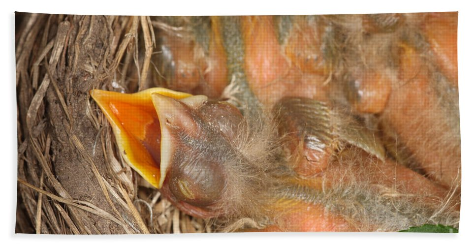 Robin Hand Towel featuring the photograph Newborn Robin Nestlings by Ted Kinsman