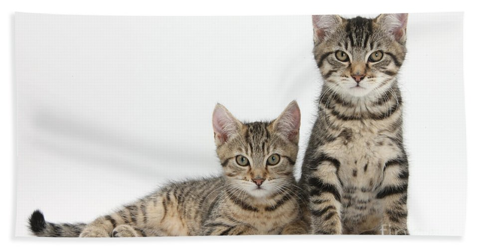 Nature Hand Towel featuring the Tabby Kittens by Mark Taylor