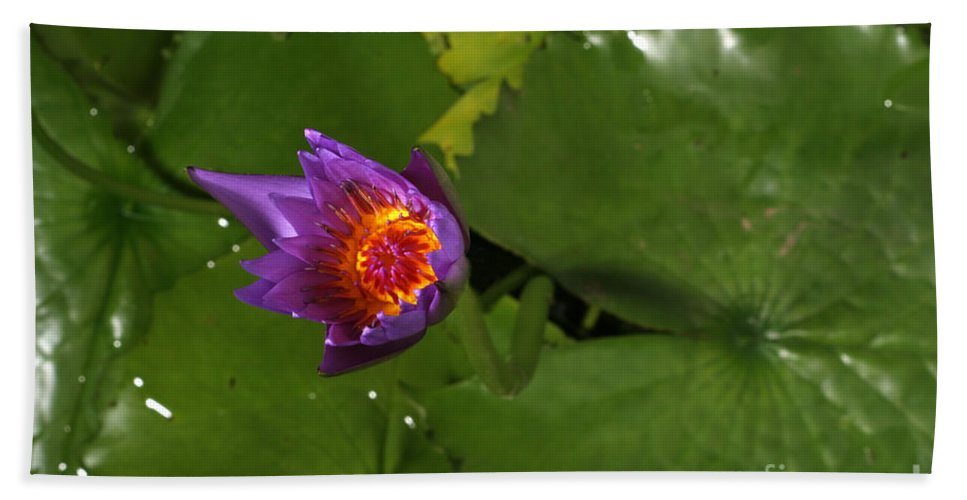 Flora Hand Towel featuring the photograph Waterlily Opening Part Of A Series by Ted Kinsman