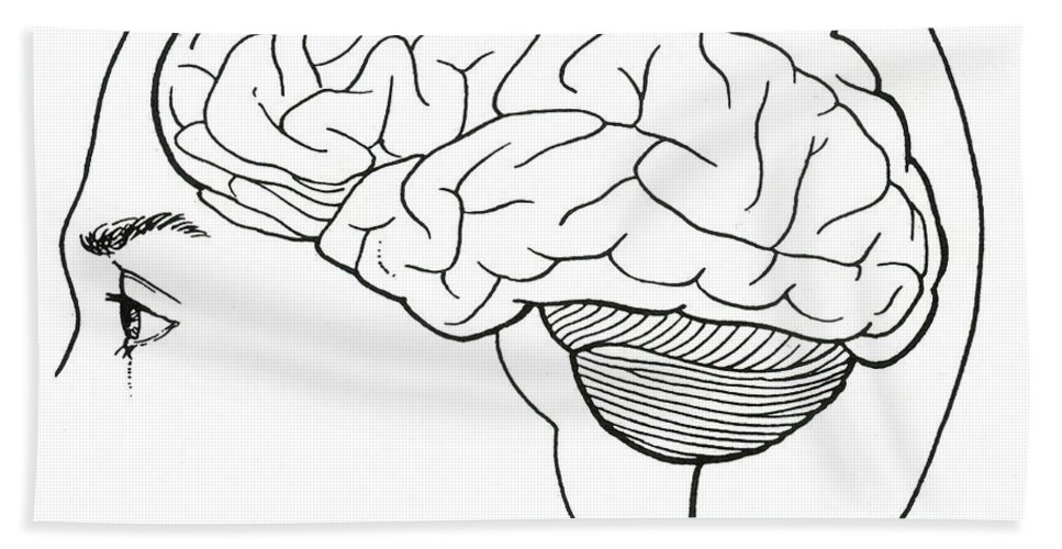 Science Hand Towel featuring the photograph Brain by Science Source